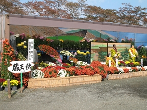Miyagi Chrysanthemum Big festival Shibata