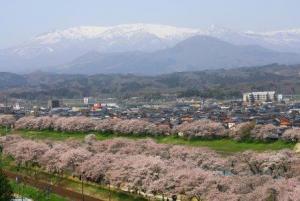 Shibata Sakura Festival