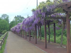 Wakabayashi Park