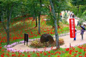Shibata Red Spider Lily Festival
